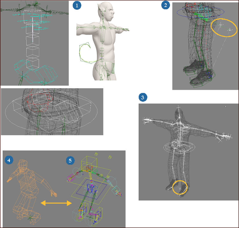 Softimage User Guide: Overview of Creating Your Own Rig